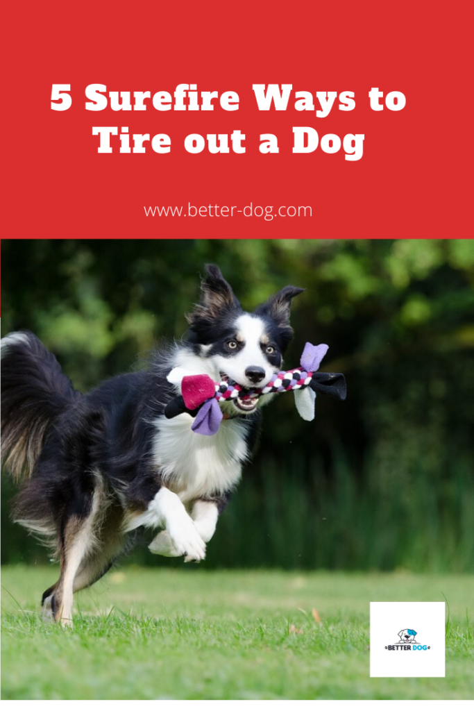 5 surefire ways to tire out a dog pin