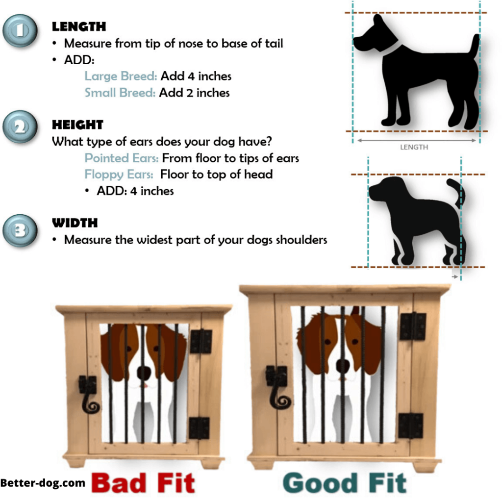 How to Measure Your Labrador's Height and Length