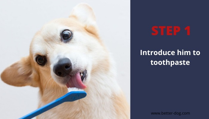 introduce toothpaste to dog before brushing
