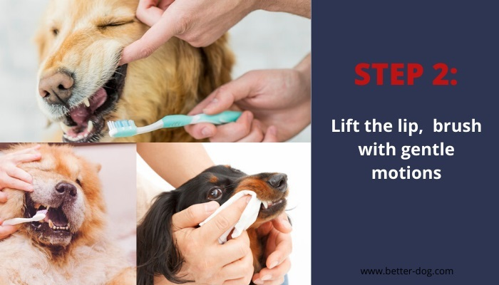 lift the lip and cleaning dog's teeth