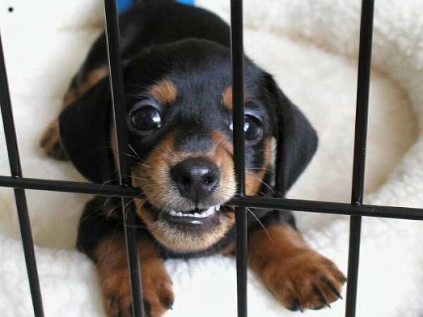 dog biting crate bar