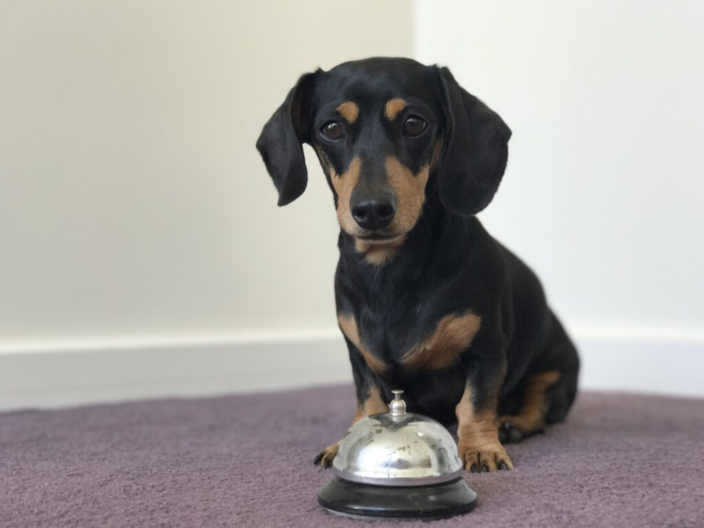 teach your dog to ring a bell