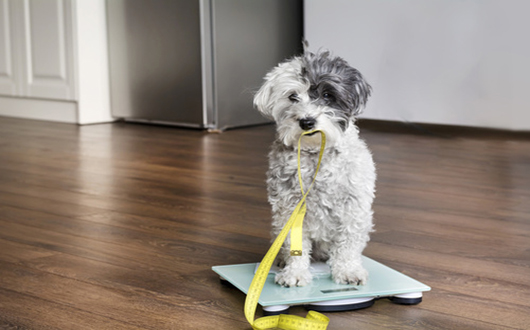 measure dog's weight
