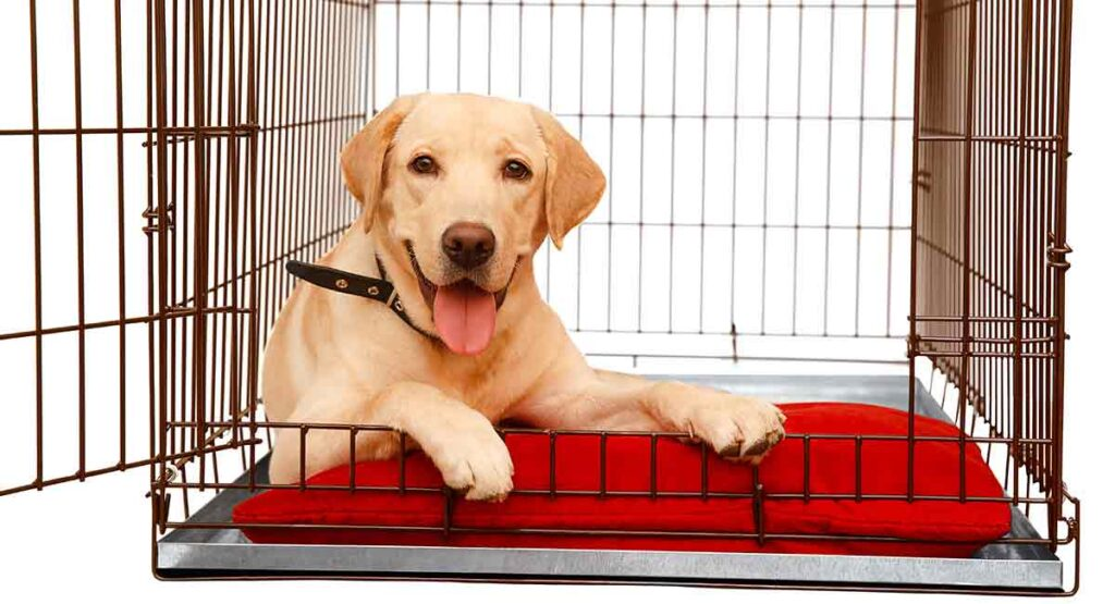 Best Crate for Labrador