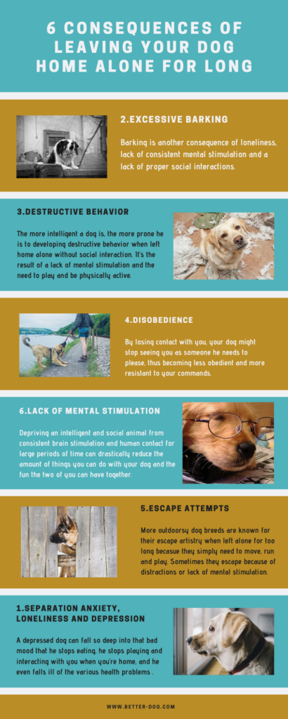 6 consequences of leaving your dog home alone for long infographic