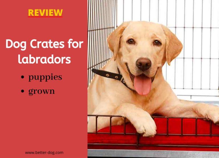 best dog crate for labradors review img