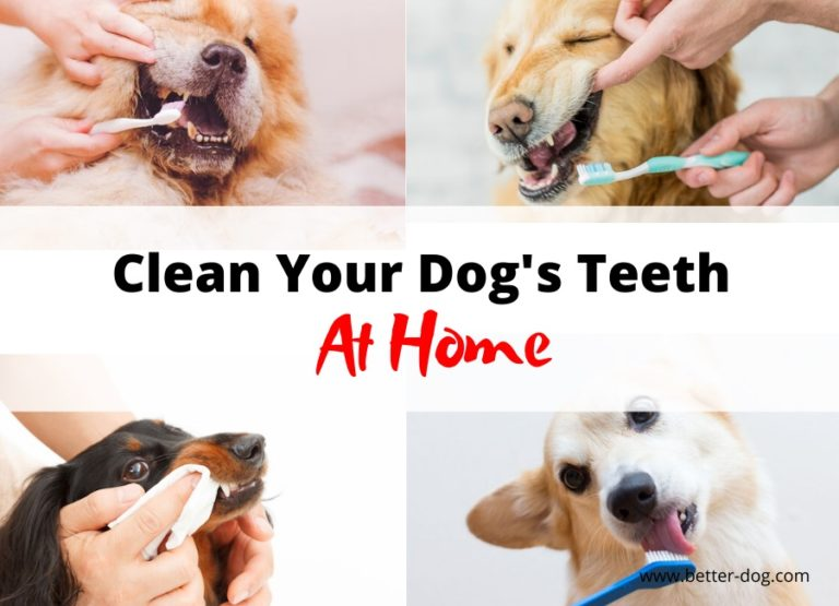 cleaning dog's teeth at home
