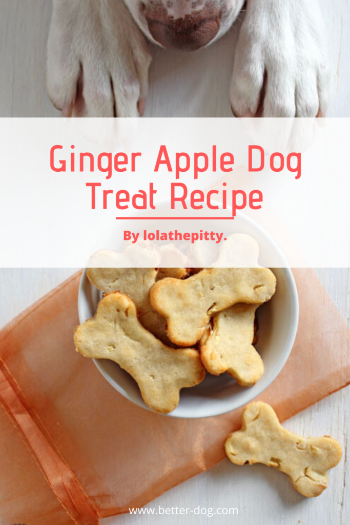 homemade ginger apple dog treat recipe