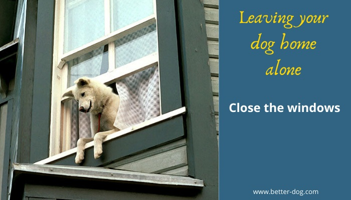 close the windows before you leave your dog home alone