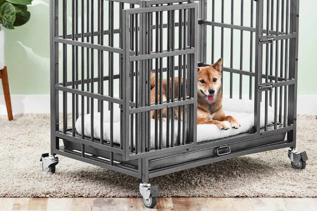 dog sitting calmly in a crate