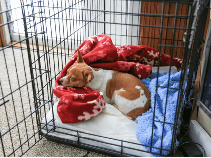 dog sleeping in a comfortable crate