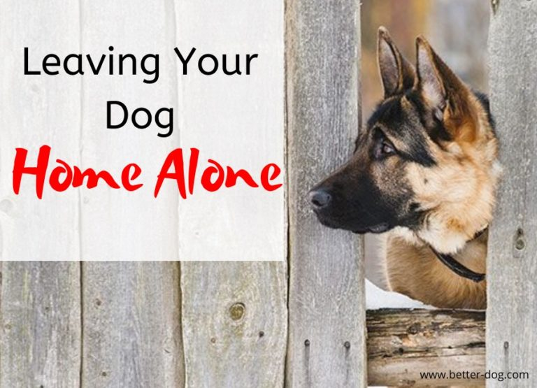 leaving dog home alone img