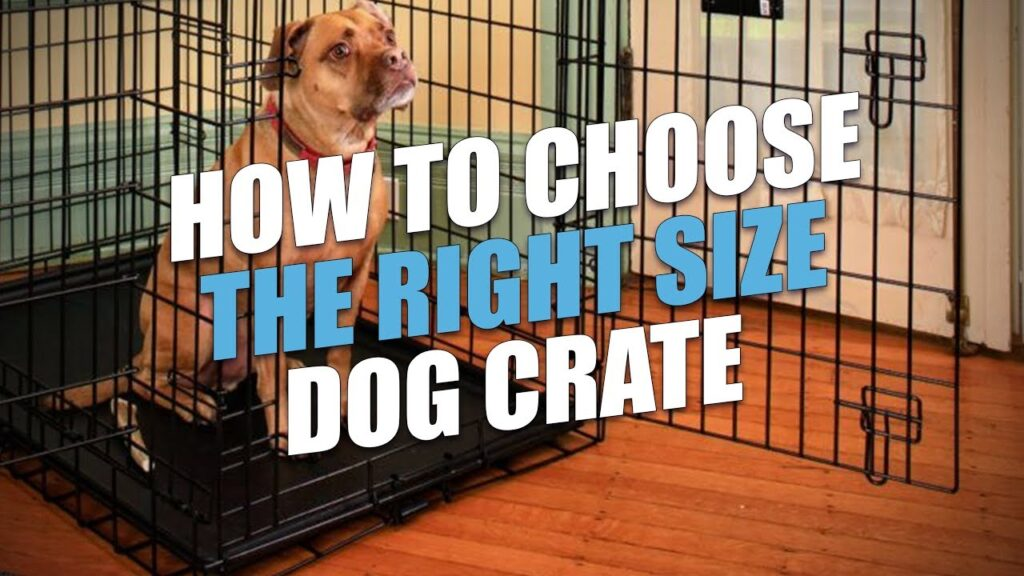Tips for Choosing the Perfect Dog Crate