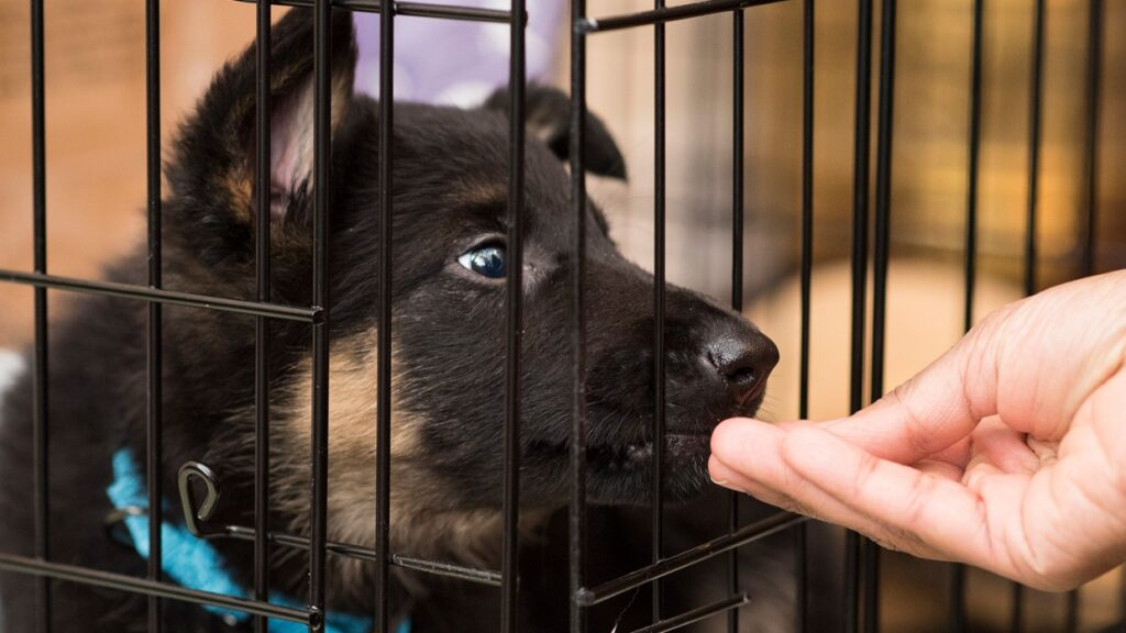 3 Step Guide to Crate Train Any Dog