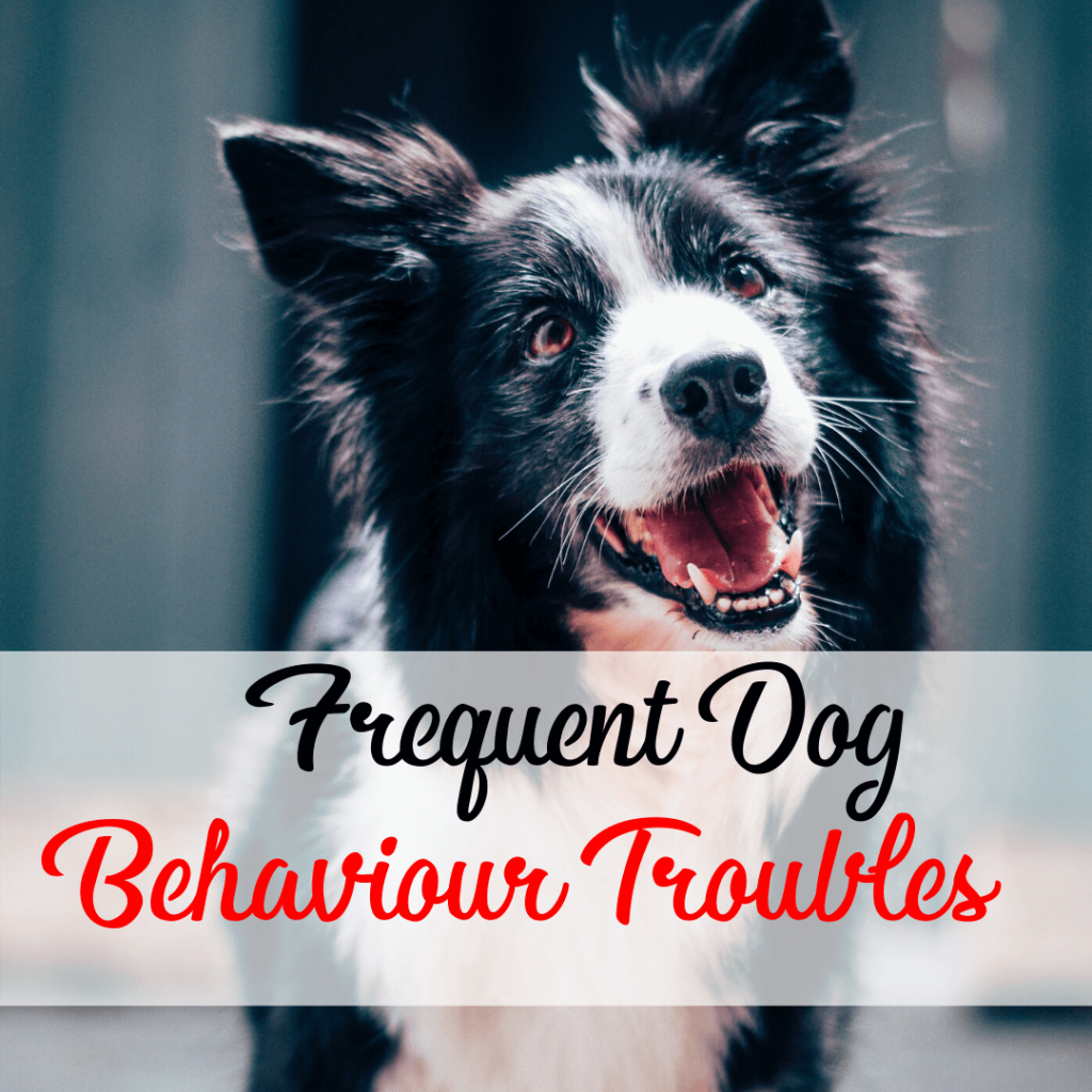 Dog Behaviour Trouble
