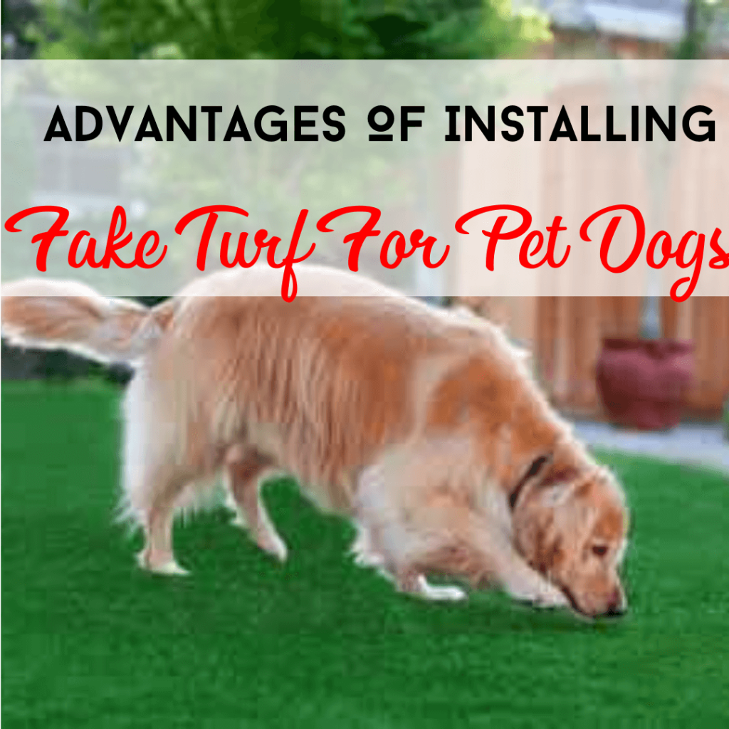 Installing Fake Turf For Pet Dog