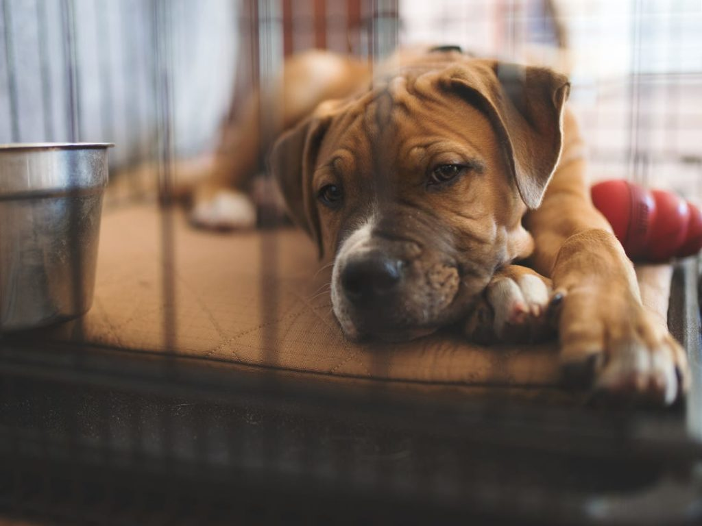 best dog kennels