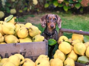 Best Dog Food for Digestive Problems