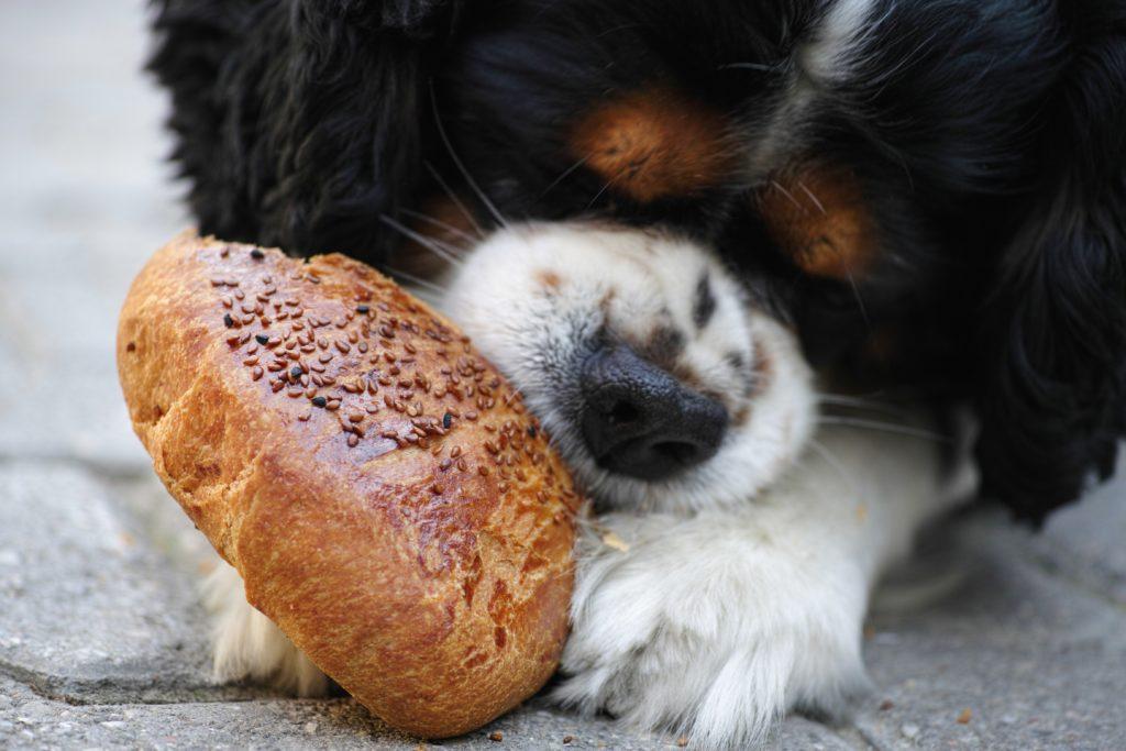 dog food for flatulence