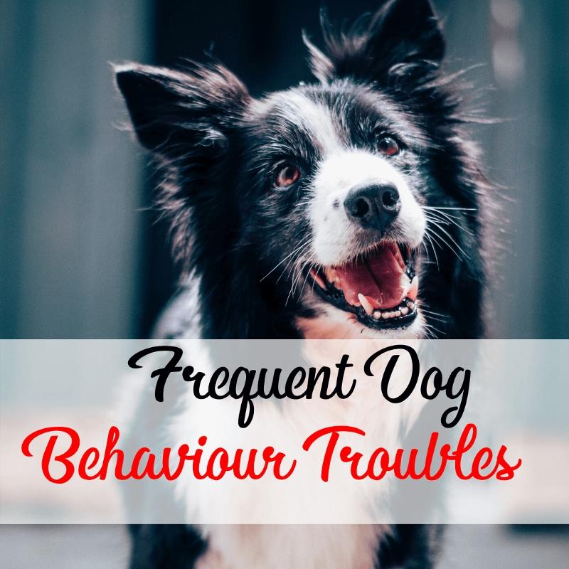 Dog Behavior Trouble