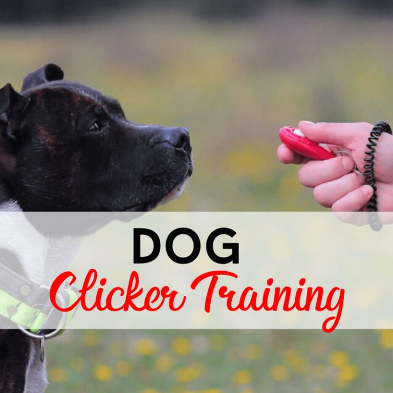 Dog Clicker Training