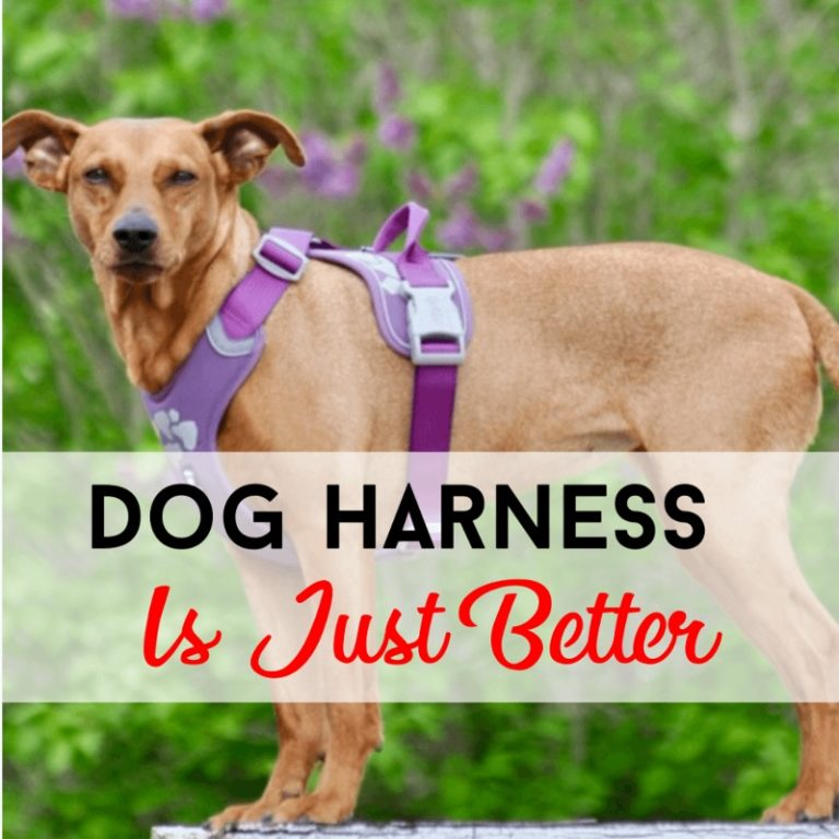 Dog Harness Is Just Better