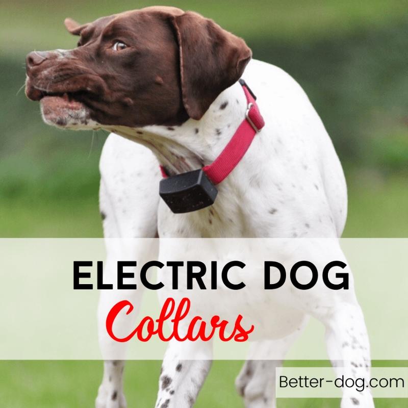 Electric Dog Collar