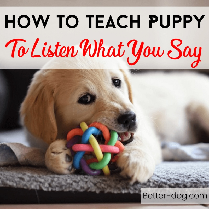 How To Teach Puppy To Listen