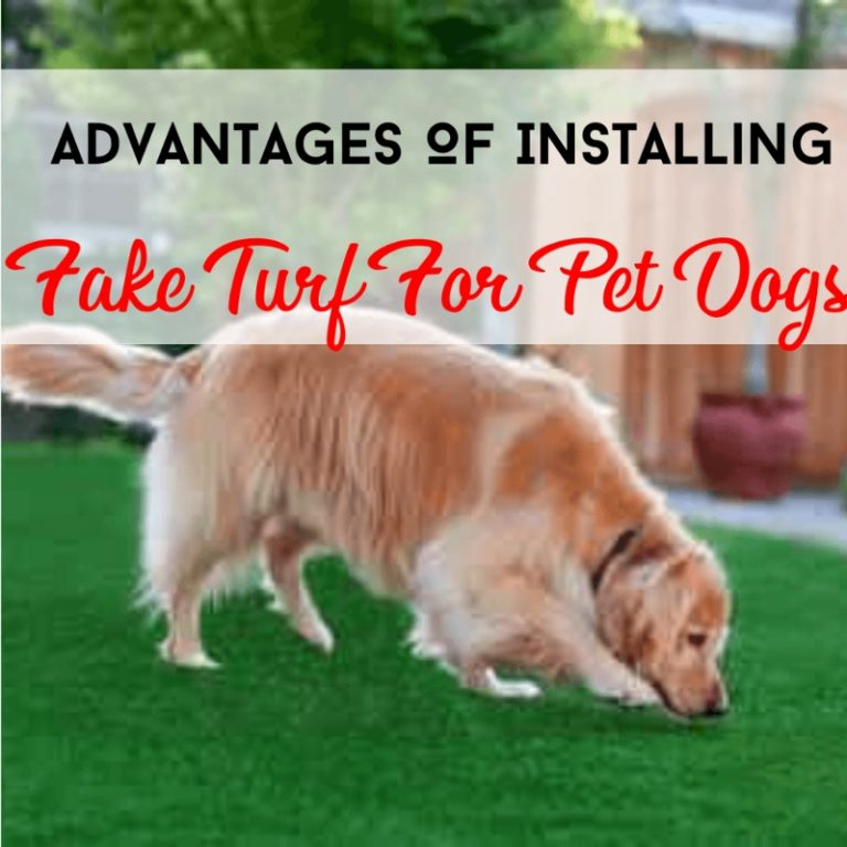 Installing Fake Turf For Dog