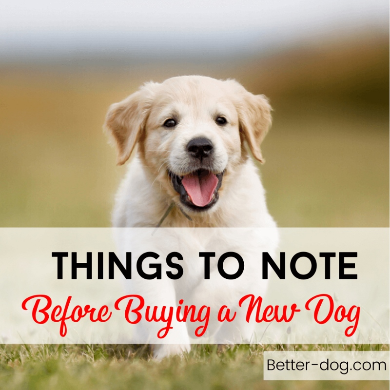 hings To Note Before Buying a New Dog
